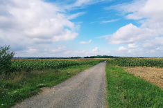 View post titled Iowa Land Auction Prices, September 13-19, 2019