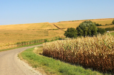 View post titled Iowa Land Auction Prices, October 4-10, 2019