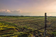 View post titled Iowa Land Auction Prices, August 23-29, 2019